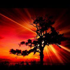 Enhanced tree/sky
