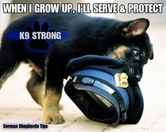 Law Enforcement Today www. Military Working Dogs, Military Dogs, Police Dogs, K9 Officer, Animal Heros, Police Wife Life, Police Lives Matter, German Shepherd Puppies, German Shepherds