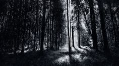 In The Woods 6 Print by Christian Klute.  All prints are professionally printed, packaged, and shipped within 3 - 4 business days. Choose from multiple sizes and hundreds of frame and mat options.  #woods #forest #trees #black #dark #light #sunset #magic #black and white #monochrome #light #white #silhouettes