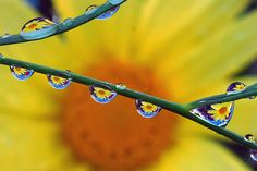 Remarkable Water Droplet Photographs by Steve Wall