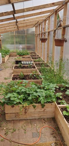 First spring with the (naptime) greenhouse! First spring wit Lean To Greenhouse, Greenhouse Plans, Greenhouse Gardening, Container Gardening, Edible Garden, Easy Garden, Permaculture, Outdoor Landscaping, Gardening For Beginners
