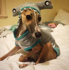 DIY Pet Costume Ideas | POPSUGAR Smart Living Photo 50
