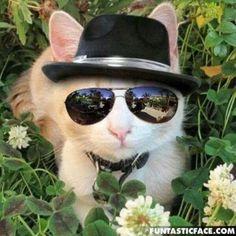 """""""Não há nada mais divertido que um gato jovem, nem mais sério que um gato idoso""""  (Thomas Fuller)"""