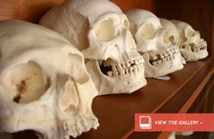 Stone Age Women Endured Regular Violence : Discovery News