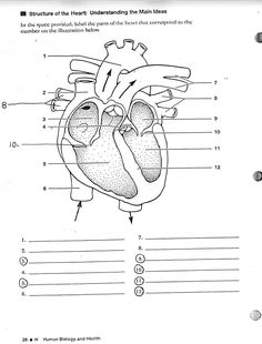 Heart Circulatory System Coloring Pages | RT school | Pinterest ...