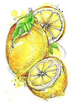 Raw Ingredients on Behance Abby Diamond Lemon Watercolor, Watercolor Fruit, Fruit Painting, Watercolor And Ink, Watercolor Paintings, Watercolors, Botanical Illustration, Illustration Art, Natural Form Art