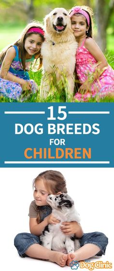 free of charge plan dog breeds for kids look at : Want for more information on the several dog breeds? There are still over 200 different Kennel Club recognised dog breeds, so this means there is a lo. Best Family Dog Breeds, Top Dog Breeds, Best Dog Breeds, Puppy Breeds, Best Large Dog Breeds, Small Dogs For Kids, Animals For Kids, Best Dogs With Kids, Best Puppies For Kids