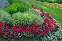 Add colorful annuals to perennial beds for visual interest and color over an extended period