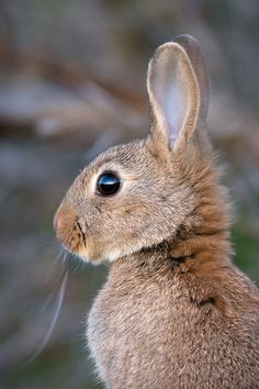 For the bunny lovers:) (via 500px / Rabbitses precious! by Sylvain Fleur)