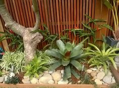 freshwater garden design tropical garden design bromeliads river pebbles pool surrounds subtropical garden landscapes sydney