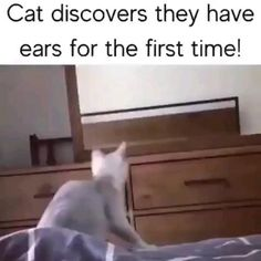 Funny Animal Jokes, Funny Cute Cats, Cute Funny Animals, Funny Animal Pictures, Animal Memes, Funny Short Videos, Funny Video Memes, Really Funny Memes, Cute Animal Videos