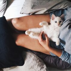 When your greatest admirer is as adorable as this precious kitten, it's hard to have a bad day! Soak up the good vibes and make time for #kitten play time! #furryfriends #playtime