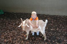 goats are so cool
