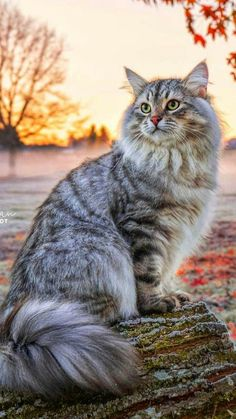 Cute Cats And Kittens, Cool Cats, Kittens Cutest, Pretty Cats, Beautiful Cats, Animals Beautiful, Cute Baby Animals, Animals And Pets, Raining Cats And Dogs