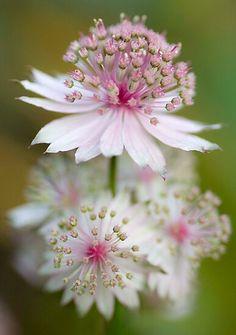 Unusual Flowers, Most Beautiful Flowers, My Flower, Pretty Flowers, Beautiful Gardens, Flower Power, Pink Flowers, Cactus Flower, Beautiful Gorgeous