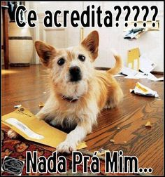 Nenhuma carta para ele!  Veja mais em: http://www.jacaesta.com/nenhuma-carta-para-ele/