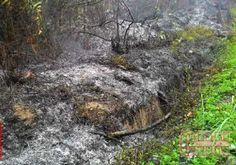 254,7 Hektare Lahan Bengkalis Terbakar