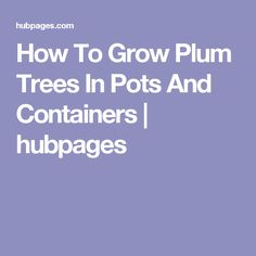 How To Grow Plum Trees In Pots And Containers | hubpages