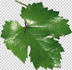 This PNG image was uploaded on December am by user: brooddog and is about Common Grape Vine, Dill, Grape Juice, Grape Leaves, Grapevine Family. Vine Leaves, Plant Leaves, Us Images, Clipart, Grape Vines, Plants, Cold, Tejido, Home