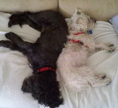 My 2 doggies....I should have named them Ying and Yang!