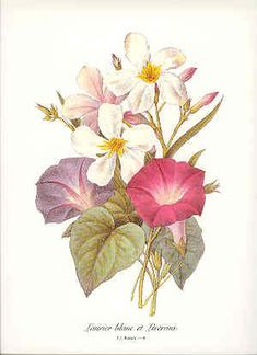 Redoute Botanical Bouquet Print 4 by BritmoreCottage on Etsy