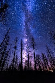 Reach for the Sky by Wayne Pinkston