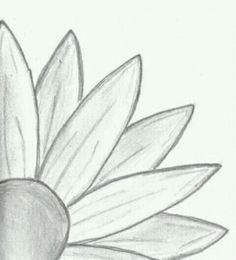 Art Pencil Drawings Of Flowers Creative Commons Attribution No