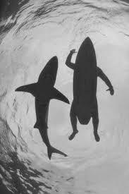 Resultado de imagen para frases surf