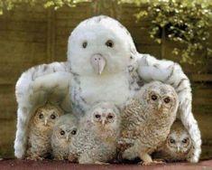 Fotos de todos los bebés del reino animal: enero 2013