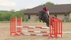 Gymnastic jumping exercises are fantastic to strengthen your horse's muscles. Here are some ideas to introduce gymnastic jumping to young horses' training. Equestrian Boots, Equestrian Outfits, Equestrian Fashion, Horse Watch, Cross Country Jumps, English Riding, Show Jumping, Motivation, Horseback Riding