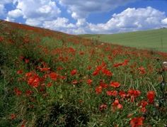 Yorkshire Wolds Way - National Trails