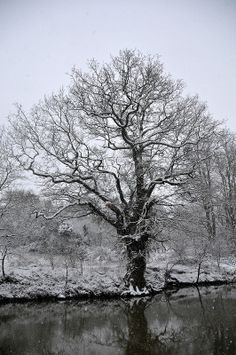 Tree on the bank of the River Medway just outside Maidstone