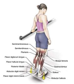 6 Exercises to Stretch Your Toes, Ankles, Soleus and Gastrocnemius Muscles - The Health Science Journal Lower Body Stretches, Muscle Stretches, Ankle Stretches, Stretch Calf Muscles, Peroneus Longus, Gastrocnemius Muscle, Hamstring Muscles, Benefits Of Exercise, Health