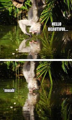 Funny monkey seeing his reflection