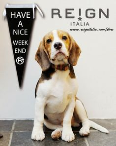 reignblog: Have a nice Weekend. REIGN ITALIA :-)
