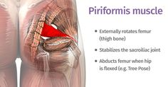 piriformis : how can one little muscle cause so much trouble? Yoga poses and sequences to help with piriformis syndrome - The piriformis : how can one little muscle cause so much trouble? Yoga poses and sequences to help with piriformis syndrome - Hip Pain, Back Pain, Fitness Workouts, Syndrome Pyramidal, Tight It Band, Muscle Piriforme, Psoas Muscle, Muscle Pain, Sciatic Pain