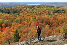 8 Best Campgrounds in Algonquin Provincial Park Ontario Camping, Ontario Travel, Park Trails, Hiking Trails, Hiking Staff, Best Campgrounds, Algonquin Park, Parks Canada, Canada Travel