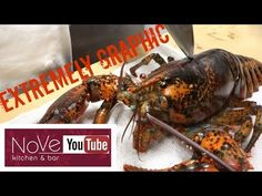 how to cook live lobster youtube