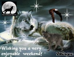 Wild Wolfs love - Community - Google+