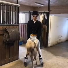 Funny Horse Videos, Funny Horse Memes, Funny Horse Pictures, Funny Animal Jokes, Funny Horses, Cute Horses, Cute Animal Videos, Cute Funny Animals, Beautiful Horses