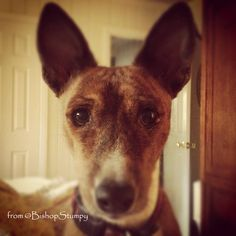 """""""Did you say hike?"""" from @BishopStumpy #Dogs #STPLive"""