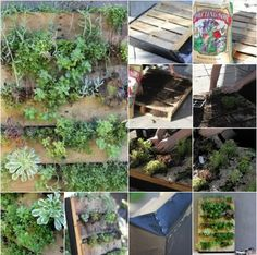 DIY Project : Recycled Pallet Vertical Garden   -Creative Gardening Techniques for Growing Up in Small Spaces -   Don't forget to subscribe : http://www.youtube.com/user/TheHomesteading