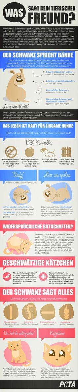 Infografik zur Hunde-/Katzensprache