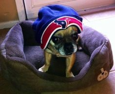 Houston Texans. Football puppies!