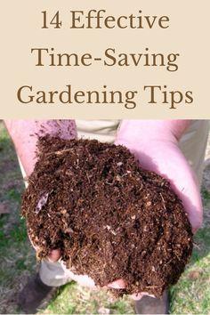 Home Grown Vegetables, Growing Vegetables, Veggies, Edible Garden, Easy Garden, Gardening For Beginners, Gardening Tips, Container Gardening, Sustainable Gardening