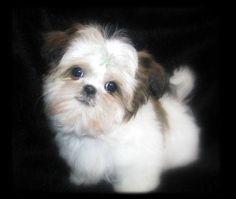 Fluffy little one