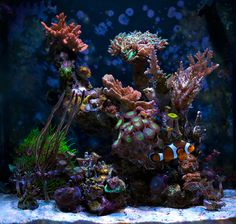 Polarcollision - 2013 Featured Nano Reefs - Featured Aquariums - Monthly Featured Nano Reef Aquarium Profiles - Nano-Reef.com Forums