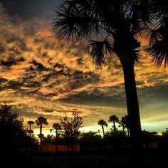 Naples, FL in Florida
