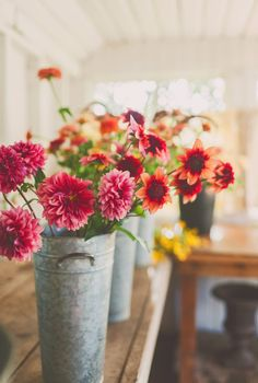 Erin Benzakein of Floret Flower Farm is inspiring a new generation of florist-farmers with hands-on workshops at her farm in Washington's lush Skagit Valley. Flower Farm, My Flower, Flower Power, Cactus Flower, Fresh Flowers, Pink Flowers, Beautiful Flowers, Exotic Flowers, Yellow Roses
