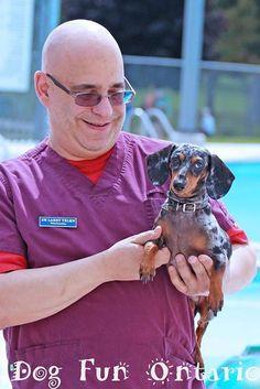Weiner Dogs, Type 3, Dachshund, Leo, Facebook, Photos, Pictures, Weenie Dogs, Weenie Dogs